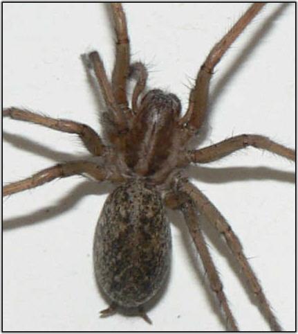 Carpet Beetle Bite
